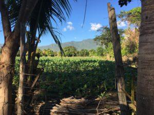 Zemis Tobacco Plantation