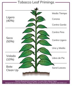 pic of the tobacco plant, showing the names of the leaves