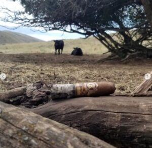 pic Bryan took of his cigar on a log with bulls in background