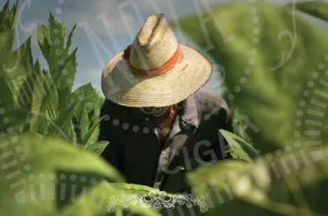 pic of someone in the field that I got from their site